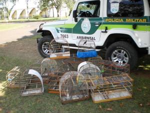 PM apreende pássaros silvestres e espingarda em Antonina
